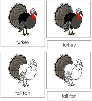 Turkey Nomenclature Cards