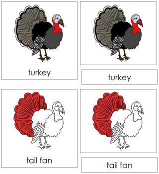 Turkey Nomenclature Cards (Red)