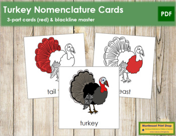 Turkey Nomenclature Cards (Red)