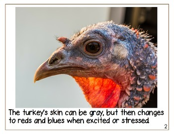 Turkey Nonfiction Book