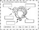 Turkey Nonfiction Reading Passage and Activities