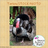 Turkey Real-life Picture