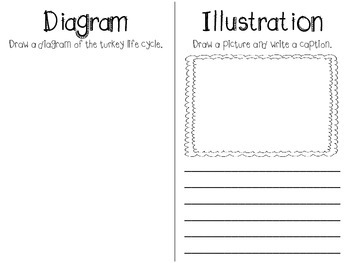 Turkey Text Features Book (Freebie)