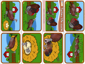 Turkey life cycle mini book (simplified version)
