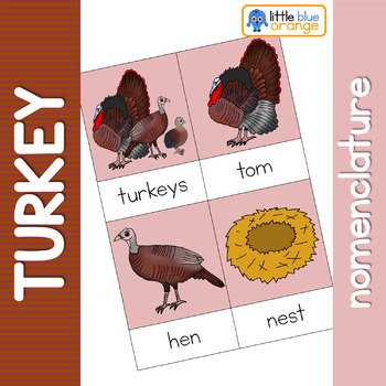 Turkey life cycle nomenclature cards