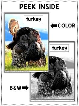 Close Reading Passage - Turkey Activities