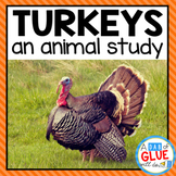 Turkeys: An Animal Study