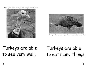 Turkeys Are- a non-fiction guided reading book
