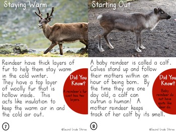 Turkeys, Reindeer, Groundhogs, Endangered, Rabbits - Nonfiction Bundle #2