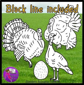 Turkeys clip art