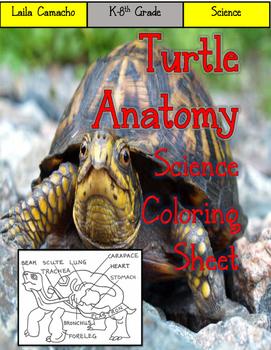 Turtle Anatomy Craft