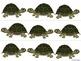 Turtle Border