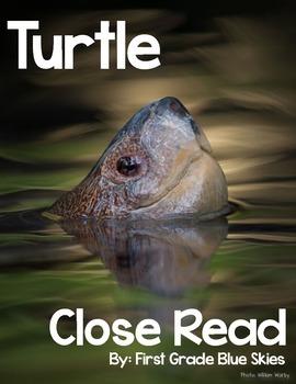 Turtle Close Read