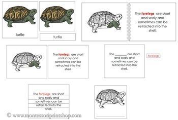 Turtle Definition Set