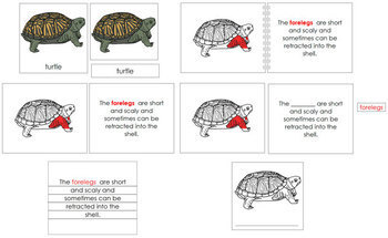 Turtle Definition Set (Red)