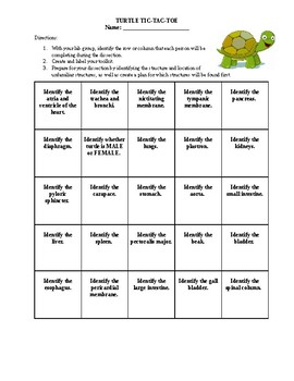 Turtle Dissection Rubric: Tic Tac Toe
