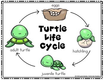 Turtle Life Cycle Craft