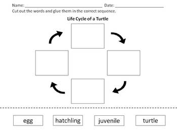 Turtle Life Cycle - Cut and Glue Activity