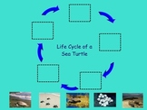 "Turtle Life Cycle Smart Doc- Non-fiction ""big book"" ; Interactive Life Cycle"