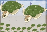 Turtle Lunch Count