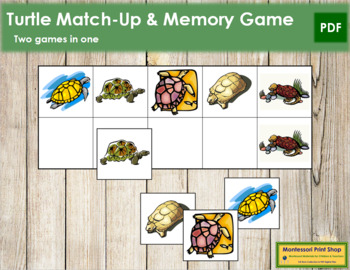 Turtle Match-Up and Memory