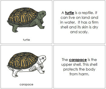 Turtle Nomenclature Book