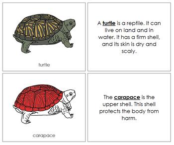 Turtle Nomenclature Book (Red)