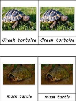 Turtle Species Montessori 3 Part Cards