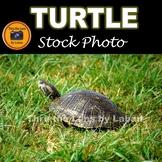 Turtle Stock Photo #282