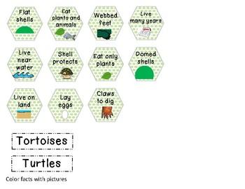 Turtle-Tortoise Venn diagram craft