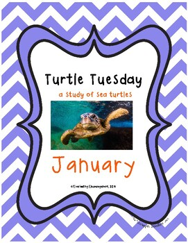 Turtle Tuesday January Package