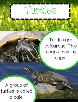 Turtle Unit