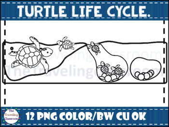 Turtle life cycle Clip Art