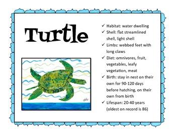 Turtle vs. Tortoise - The Foolish Tortoise by Eric Carle
