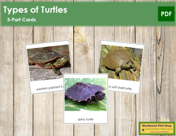 Turtles: 3-Part Cards