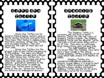 Turtles: An Informational Unit