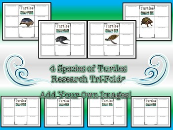 Turtles Research Tri-Folds & Graphic Organizers