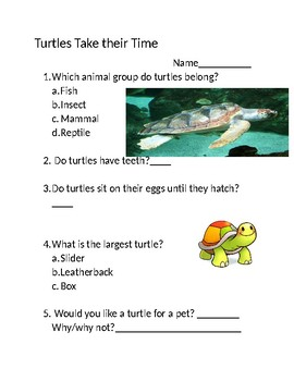 Turtles Take Their Time Test