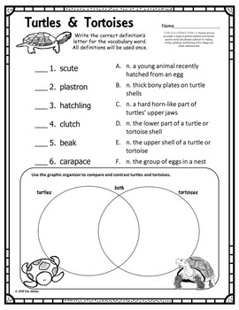 Turtles and Tortoises Vocabulary Assessment