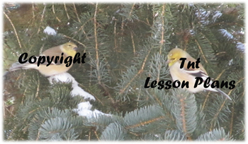 Two Song Birds in Winter Pine Tree