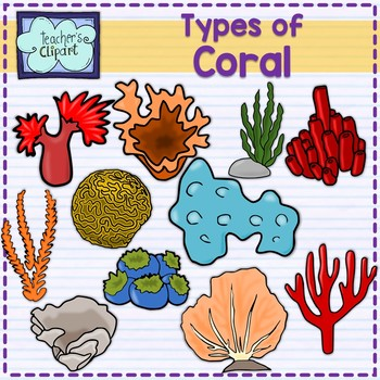 Type of Coral Clip art (Custom request)