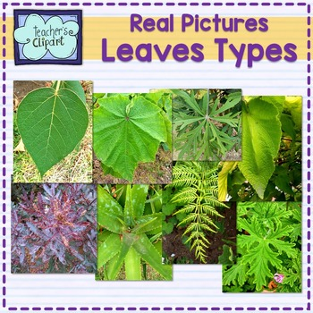 Type of leaves Pictures - stock photos For Personal and Commercial use
