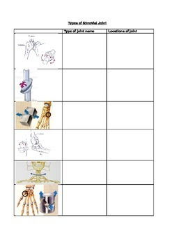 Synovial Joints Worksheets & Teaching Resources   TpT