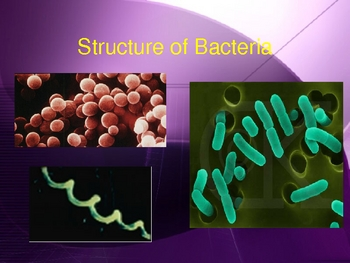 Types and Characteristic of Bacteria - Grade 11 college level biology