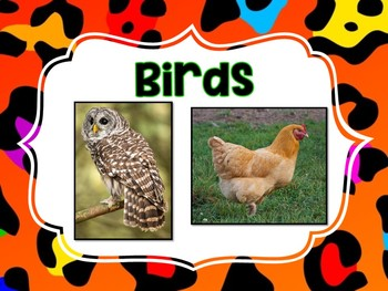 Types of Animals Posters and Animal Needs
