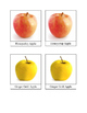 Types of Apples 3 Part Cards