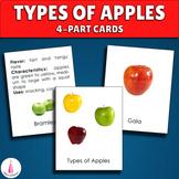 Types of Apples Montessori 4-part Cards Vocabulary Identif