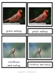 Types of Beaks Montessori 3 Part Cards