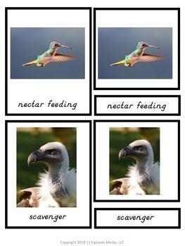 Montessori 3 Part Cards - Types of Beaks