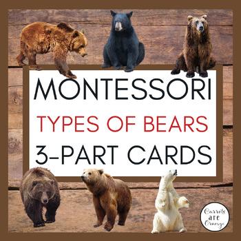 Types of Bear Montessori Cards
